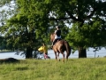 häst-2